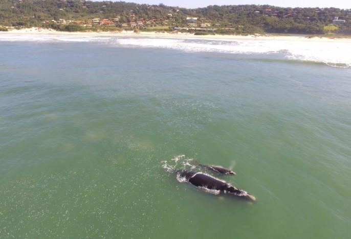 baleia-franca-praia-do-rosa-hotel-rossoma